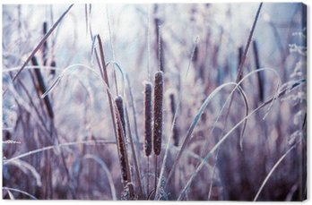 Obraz na Płótnie Rośliny pokryte szronem