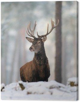 Rothirsch, Rotwild, Winter