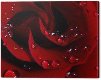 Obraz na Płótnie Róża z kropli wody