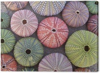 Obraz na Płótnie Różnorodność kolorowe jeżowce na mokrym piasku plaży