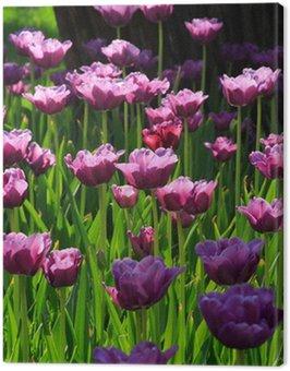Różowe tulipany diamentowe