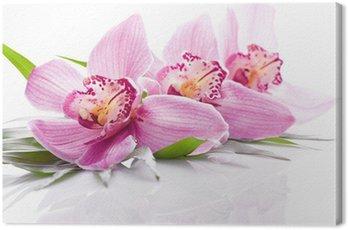 Obraz na Płótnie Różowy kwiat orchidei