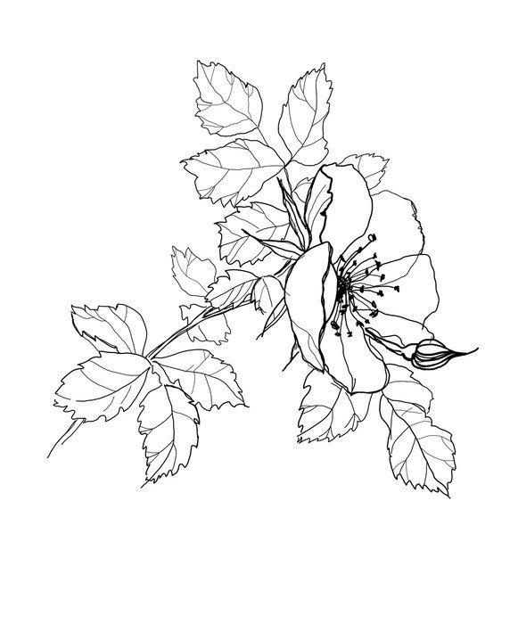 Obraz na Płótnie Róży kwiat rysunek ołówkiem • Pixers