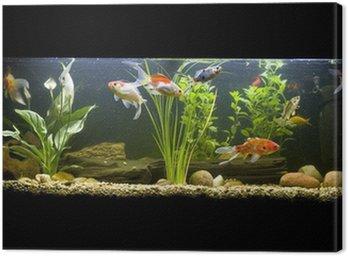 Obraz na Płótnie Rybka akwarium