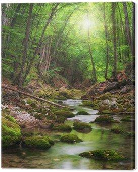 Obraz na Płótnie Rzeka głęboko w lasów górskich