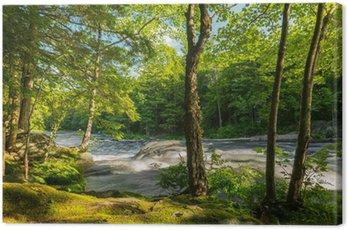 Obraz na Płótnie Rzeka w lesie
