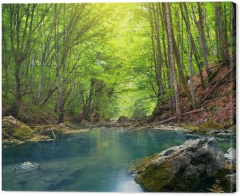 Obraz na Płótnie Rzeki w lasach górskich.