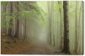 Ścieżka na granicy drzew iglastych i liściastych