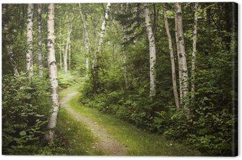 Obraz na Płótnie Ścieżka w zielonym lesie latem