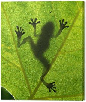 Obraz na Płótnie Shadow żaba na liściu