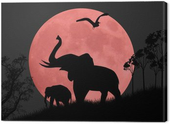 Obraz na Płótnie Silhouette widok słoni w nocy