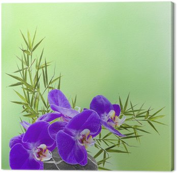 Obraz na Płótnie Skład ikebana, orchidea, bambou, galet