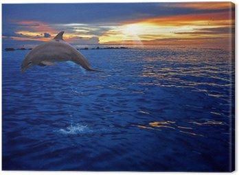 Obraz na Płótnie Skoki delfinów