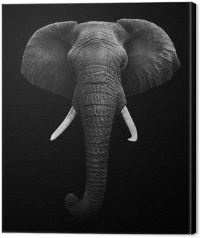 Obraz na Płótnie Słoń afrykański samodzielnie