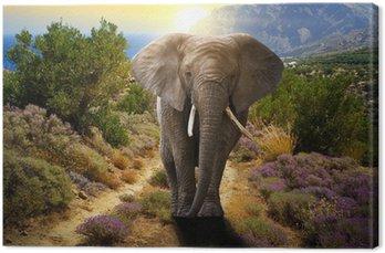 Obraz na Płótnie Słoń chodzenie na drodze o zachodzie słońca