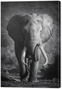 Obraz na Płótnie Słoń (przetwarzanie artystyczne)