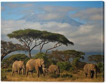 Obraz na Płótnie Słoń rodziny przed mt. Kilimandżaro