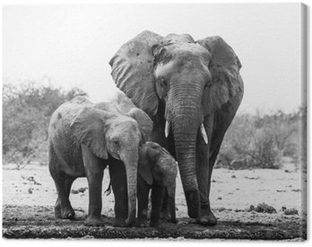 Obraz na Płótnie Słoń rodziny w czerni i bieli