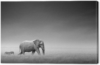 Obraz na Płótnie Słoń z zebry (przetwarzanie artystyczne)