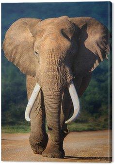 Obraz na Płótnie Słoń zbliża