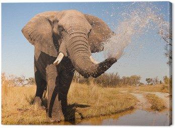 Obraz na Płótnie Słoń