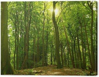 Obraz na Płótnie Słoneczny letni las