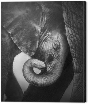 Obraz na Płótnie Słoniątka komfort poszukiwania