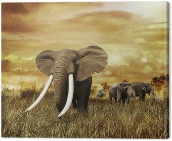 Obraz na Płótnie Słonie na zachodzie słońca