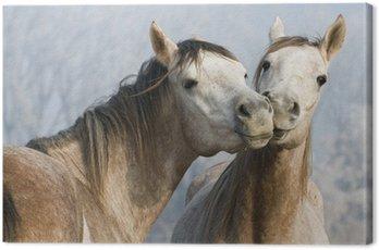 Obraz na Płótnie Śmieszne konie