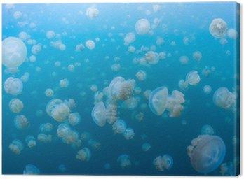 Obraz na Płótnie Snorkeling w Jellyfish Lake, Palau