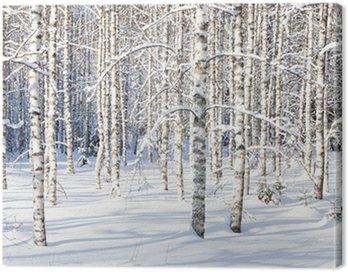 Obraz na Płótnie Snowy pni brzozy