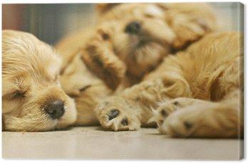 Obraz na Płótnie Spanie psa