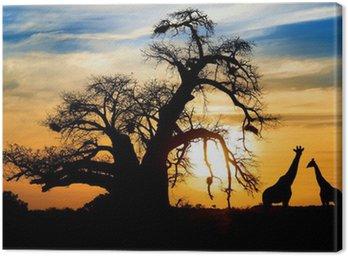 Obraz na Płótnie Spektakularny zachód słońca z baobab afrykański i żyrafy
