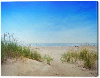 Spokojna plaża z wydmami i trawa zielona. spokojny ocean