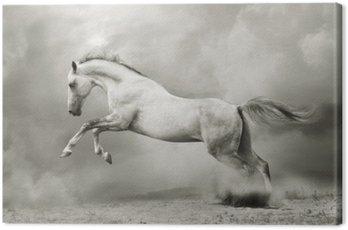 Obraz na Płótnie Srebrno-biały ogier na czarno