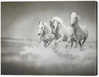 Obraz na Płótnie Stado białych koni biegnących przez wody