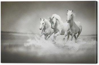 Stado białych koni biegnących przez wody