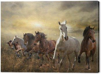 Stado koni galopujących darmo na zachodzie słońca