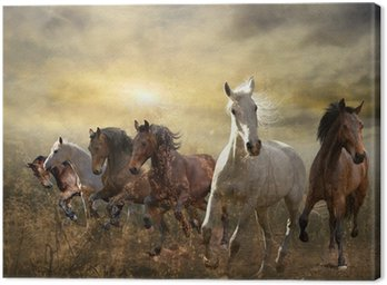 Obraz na Płótnie Stado koni galopujących darmo na zachodzie słońca