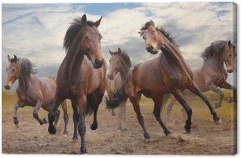 Obraz na Płótnie Stado koni
