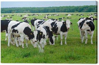 Obraz na Płótnie Stado krów na pastwisku