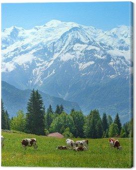 Obraz na Płótnie Stado krów na polanie i masyw górski Mont Blanc widoku