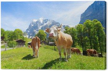 Obraz na Płótnie Stado krów