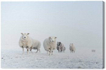 Obraz na Płótnie Stado owiec stojących w śniegu
