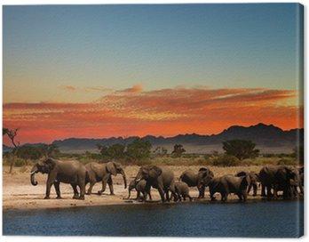 Obraz na Płótnie Stado słoni w afrykańskiej sawanny