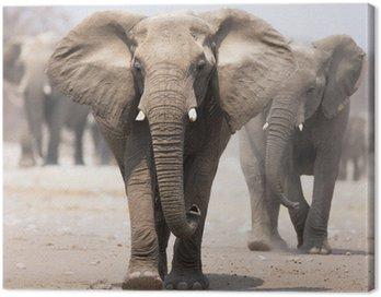 Obraz na Płótnie Stado słoni