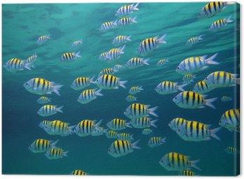 Obraz na Płótnie Starszego sierżanta ryby