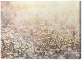 Obraz na Płótnie Stokrotka łąka