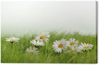 Obraz na Płótnie Stokrotki wiosna łąka