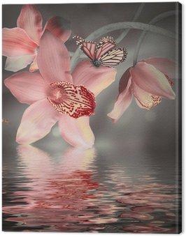 Obraz na Płótnie Storczyki z motylem na kolorowym tle